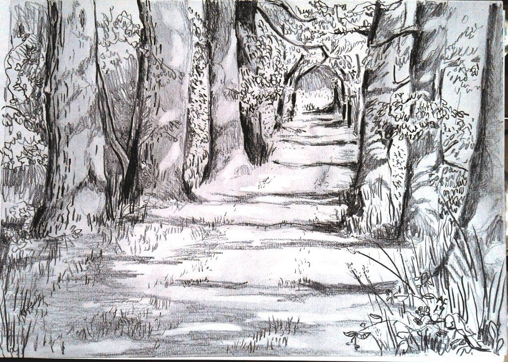 במעבה היער. 21X30 עפרון על ניר